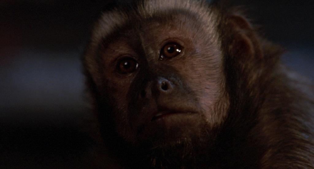 monkey-shines-scene0
