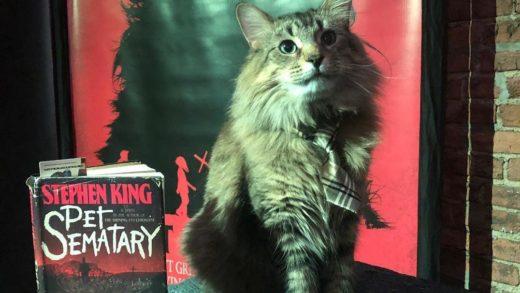 У сыгравших в «Кладбище домашних животных» котов нашлись Instagram-аккаунты