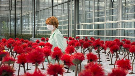 «Малыш Джо»: Цвета и цветы