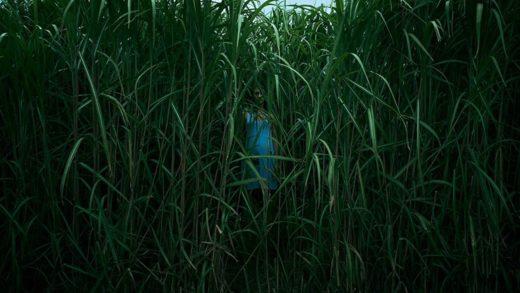 «В высокой траве»: Натали в кубе